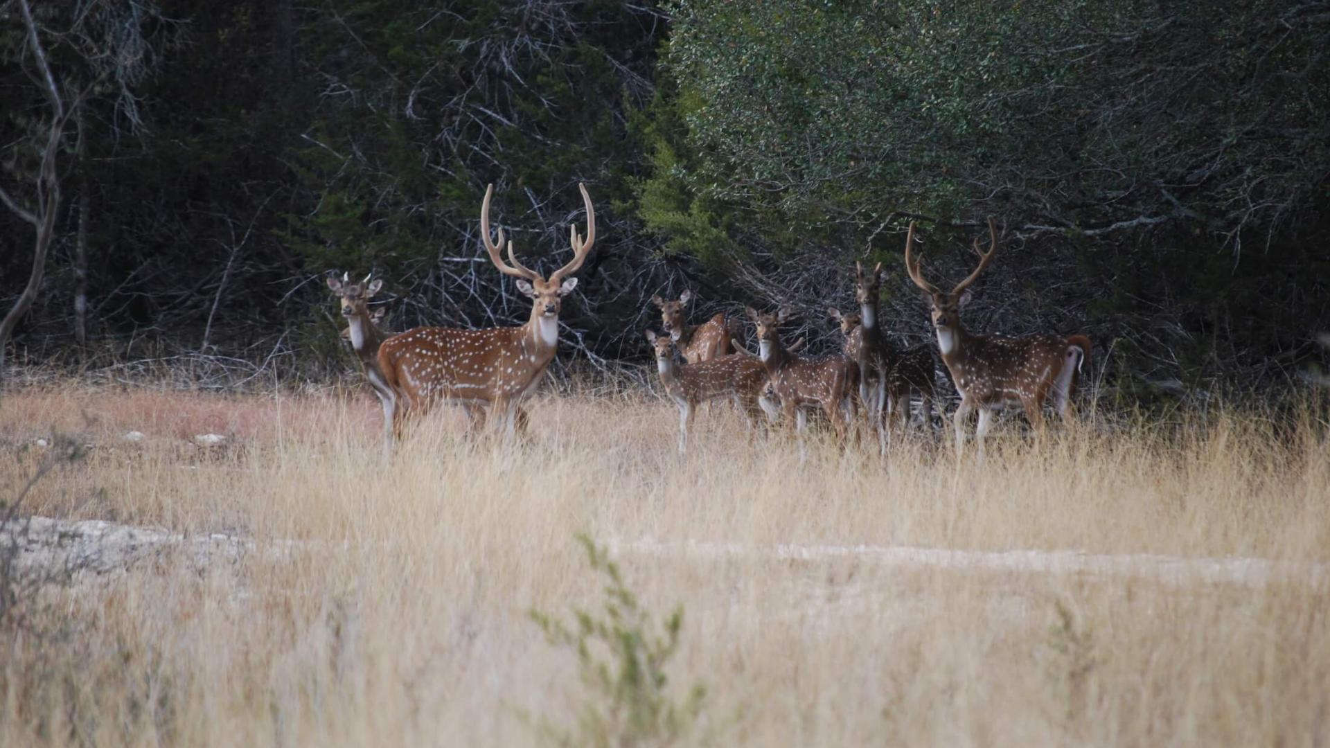 Deer hunting at Joshua Creek Ranch