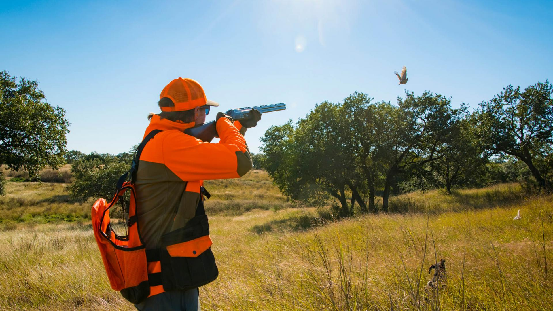 Wingshooting at Joshua Creek Ranch